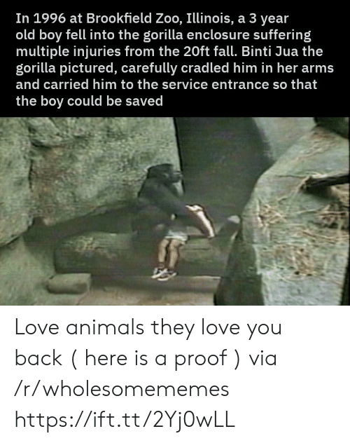 Illinois: In 1996 at Brookfield Zoo, Illinois, a 3 year  old boy fell into the gorilla enclosu re suffering  multiple injuries from the 20ft fall. Binti Jua the  gorilla pictured, carefully cradled him in her arms  and carried him to the service entrance so that  the boy could be saved Love animals they love you back ( here is a proof ) via /r/wholesomememes https://ift.tt/2Yj0wLL