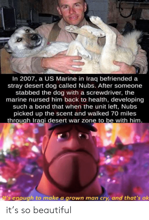 Iraq: In 2007, a US Marine in Iraq befriended a  stray desert dog called Nubs. After someone  stabbed the dog with a screwdriver, the  marine nursed him back to health, developing  such a bond that when the unit left, Nubs  picked up the scent and walked 70 miles  through Iraqi desert war zone to be with him.  it's enough to make a grown man cry, and that's ok it's so beautiful