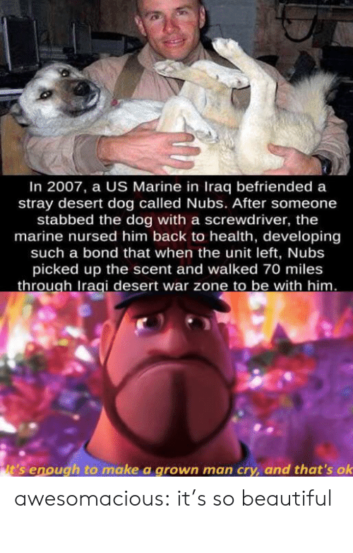 the marine: In 2007, a US Marine in Iraq befriended a  stray desert dog called Nubs. After someone  stabbed the dog with a screwdriver, the  marine nursed him back to health, developing  such a bond that when the unit left, Nubs  picked up the scent and walked 70 miles  through Iraqi desert war zone to be with him.  it's enough to make a grown man cry, and that's ok awesomacious:  it's so beautiful