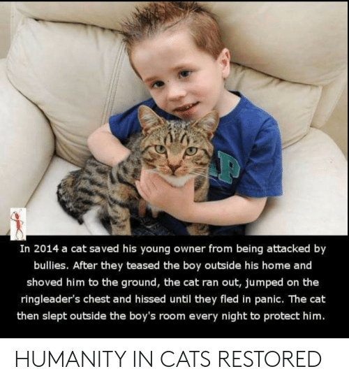 to-the-ground: In 2014 a cat saved his young owner from being attacked by  bullies. After they teased the boy outside his home and  shoved him to the ground, the cat ran out, jumped on the  ringleader's chest and hissed until they fled in panic. The cat  then slept outside the boy's room every night to protect him. HUMANITY IN CATS RESTORED