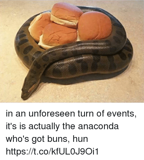 Anaconda, Girl Memes, and Got: in an unforeseen turn of events, it's is actually the anaconda who's got buns, hun https://t.co/kfUL0J9Oi1