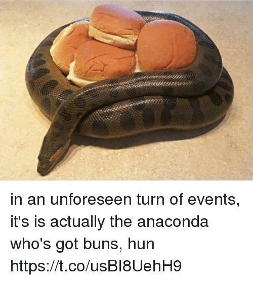 Anaconda, Girl Memes, and Got: in an unforeseen turn of events, it's is actually the anaconda who's got buns, hun https://t.co/usBI8UehH9