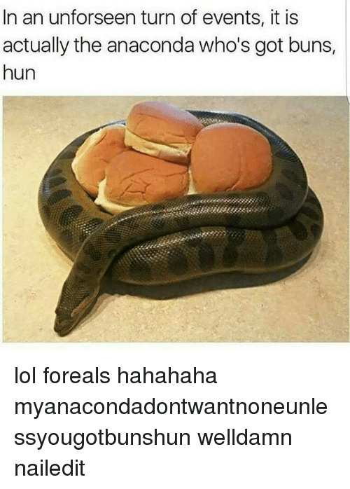 Anaconda, Lol, and Memes: In an unforseen turn of events, it is  actually the anaconda who's got buns,  hun lol foreals hahahaha myanacondadontwantnoneunlessyougotbunshun welldamn nailedit