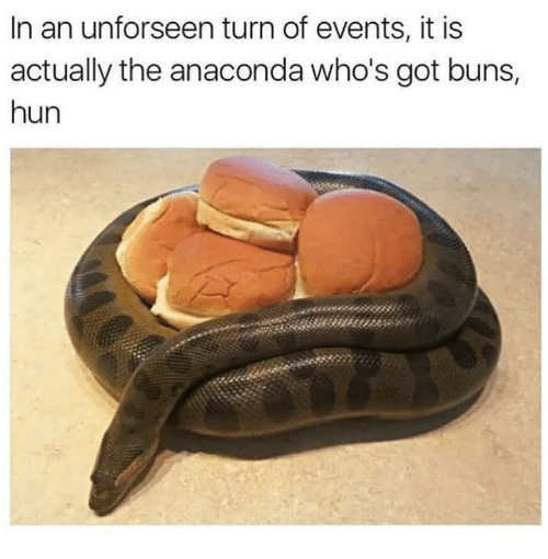 Anaconda, Got, and Events: In an unforseen turn of events, it is  actually the anaconda who's got buns,  hun  380