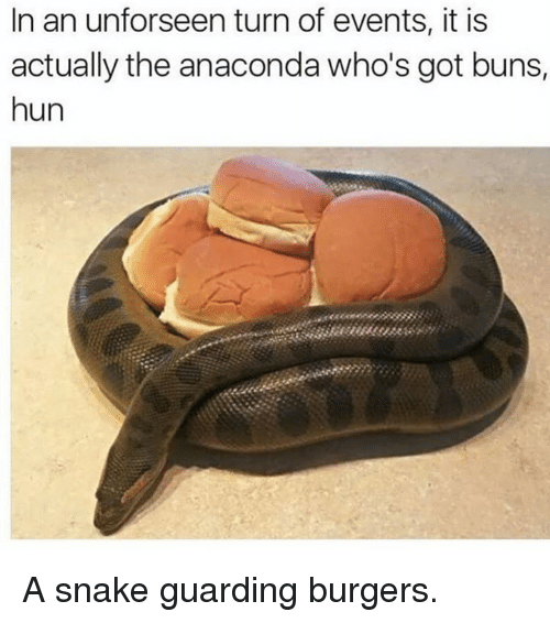 Anaconda, Memes, and Snake: In an unforseen turn of events, it is  actually the anaconda who's got buns,  hun A snake guarding burgers.