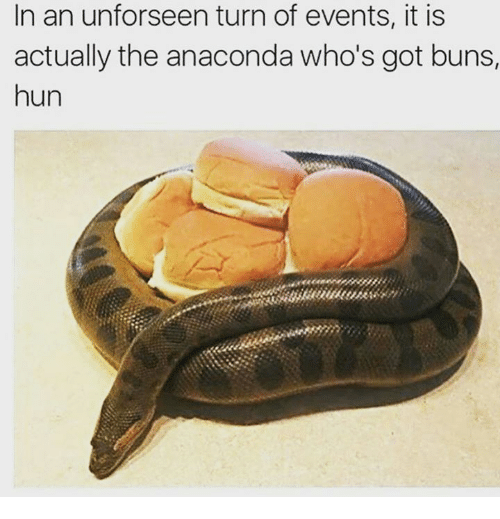 Anaconda, Memes, and Huns: In an unforseen turn of events, it is  actually the anaconda who's got buns,  hun