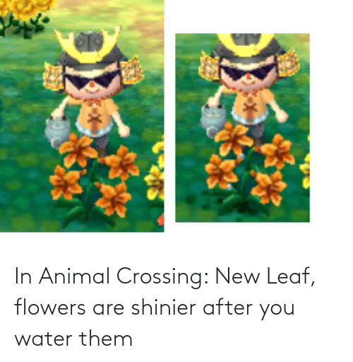 Flowers: In Animal Crossing: New Leaf, flowers are shinier after you water them