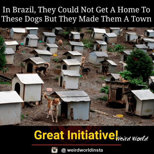 a town: In Brazil, They Could Not Get A Home To  These Dogs But They Made Them A Town  Bi  Great Initiativeeid woda  @ weirdworldinsta