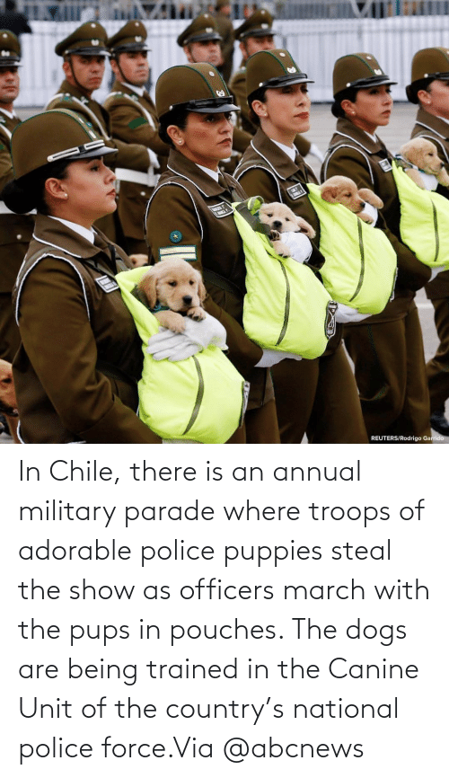 Adorable: In Chile, there is an annual military parade where troops of adorable police puppies steal the show as officers march with the pups in pouches. The dogs are being trained in the Canine Unit of the country's national police force.Via @abcnews