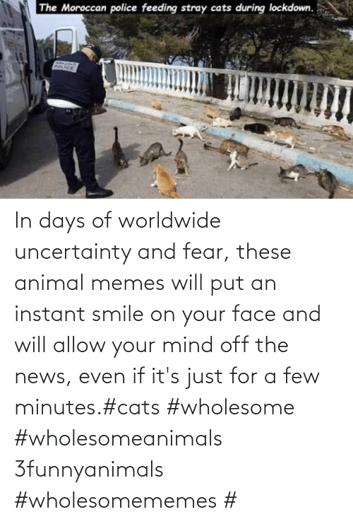 Fear: In days of worldwide uncertainty and fear, these animal memes will put an instant smile on your face and will allow your mind off the news, even if it's just for a few minutes.#cats #wholesome #wholesomeanimals 3funnyanimals #wholesomememes #