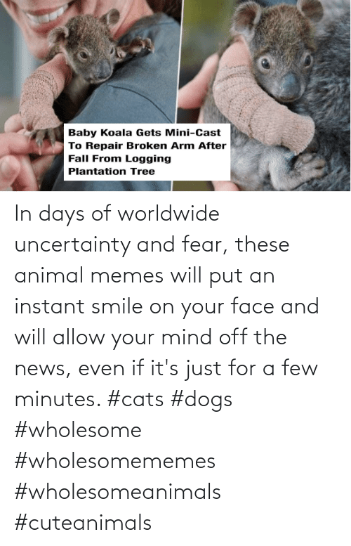 face: In days of worldwide uncertainty and fear, these animal memes will put an instant smile on your face and will allow your mind off the news, even if it's just for a few minutes. #cats #dogs #wholesome #wholesomememes #wholesomeanimals #cuteanimals