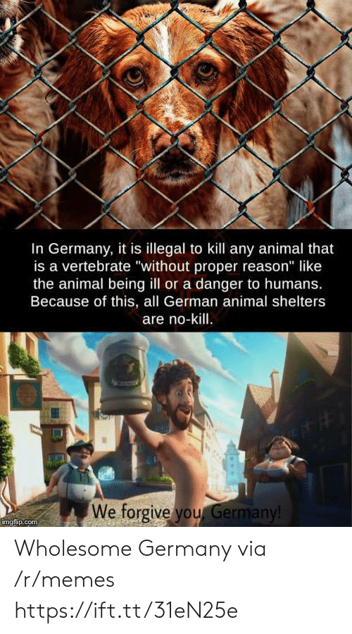 """Memes, Animal, and Germany: In Germany, it is illegal to kill any animal that  is a vertebrate """"without proper reason"""" like  the animal being ill or a danger to humans.  Because of this, all German animal shelters  are no-kill.  We forgive you Germany!  imgflip.com Wholesome Germany via /r/memes https://ift.tt/31eN25e"""
