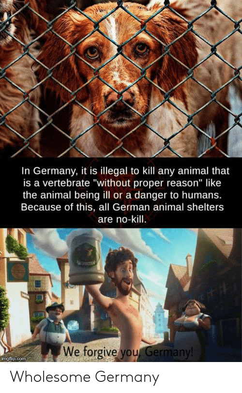 """Forgive You: In Germany, it is illegal to kill any animal that  is a vertebrate """"without proper reason"""" like  the animal being ill or a danger to humans.  Because of this, all German animal shelters  are no-kill.  We forgive you Germany!  imgflip.com Wholesome Germany"""