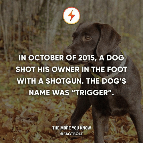 """shotgunning: IN OCTOBER OF 2015, A DOG  SHOT HIS OWNER IN THE FOOT  WITH A SHOTGUN. THE DOG'S  NAME WAS """"TRIGGER"""".  THE MORE YOU KNOW  @FACTBOLT"""