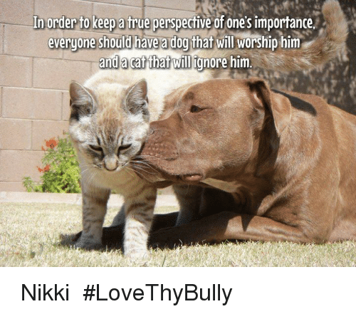 Willed Ignorance: In order to keep a true perspechive ofoneSimportancev  everyone should have a dog that will worship him  and cat that will ignore him. ♡ Nikki ♡ #LoveThyBully