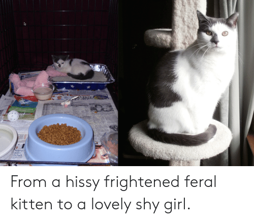 Hissy: IN  Poland  Water  24 Pack From a hissy frightened feral kitten to a lovely shy girl.