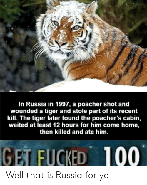 Home, Russia, and Tiger: In Russia in 1997, a poacher shot and  wounded a tiger and stole part of its recent  kill. The tiger later found the poacher's cabin,  waited at least 12 hours for him come home,  then killed and ate him.  100  GET FUCKED Well that is Russia for ya