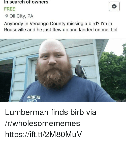 Lol, Free, and Search: In search of owners  FREE  Oil City, PA  Anybody in Venango County missing a bird? I'm in  Rouseville and he just flew up and landed on me. Lol Lumberman finds birb via /r/wholesomememes https://ift.tt/2M80MuV