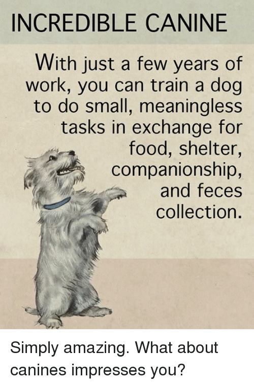 Companionship: INCREDIBLE CANINE  With just a few years of  work, you can train a dog  to do small, meaningless  tasks in exchange for  food, shelter,  companionship,  and feces  collection. Simply amazing.  What about canines impresses you?