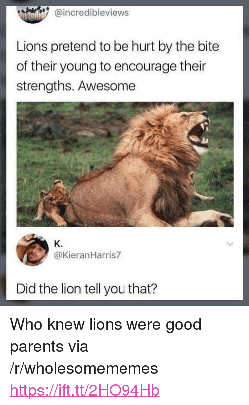"""Parents, Good, and Lion: @incredibleviews  Lions pretend to be hurt by the bite  of their young to encourage their  strengths. Awesome  K.  @KieranHarris7  Did the lion tell you that? <p>Who knew lions were good parents via /r/wholesomememes <a href=""""https://ift.tt/2HO94Hb"""">https://ift.tt/2HO94Hb</a></p>"""