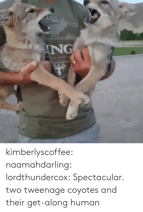 Tumblr, Blog, and Http: ING kimberlyscoffee: naamahdarling:  lordthundercox: Spectacular. two tweenage coyotes and their get-along human