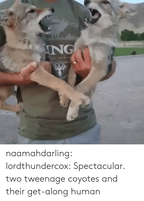 Tumblr, Blog, and Http: ING naamahdarling:  lordthundercox: Spectacular. two tweenage coyotes and their get-along human