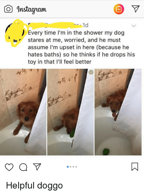 "Shower, Time, and Doggo: Instagam  1d  Every time I'm in the shower my dog  stares at me, worried, and he must  assume l'm upset in here (because he  hates baths) so he thinks if he drops his  toy in that I'll feel better  yaV"" Helpful doggo"