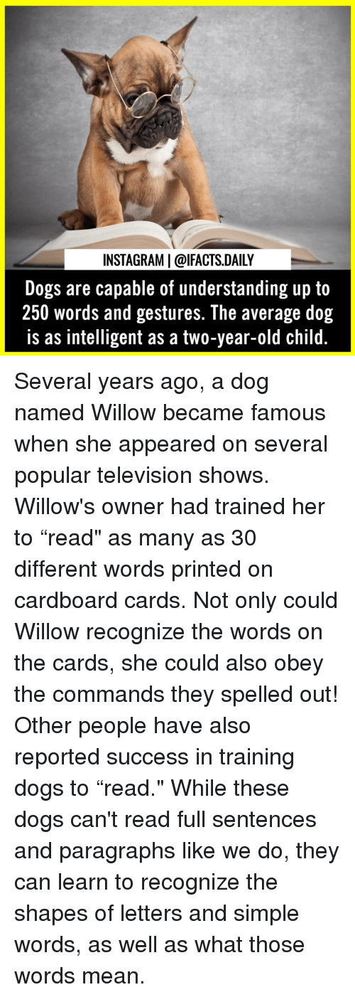 "Paragraphs: INSTAGRAM | @lFACTS.DAILY  Dogs are capable of understanding up to  250 words and gestures. The average dog  is as intelligent as a two-year-old child Several years ago, a dog named Willow became famous when she appeared on several popular television shows. Willow's owner had trained her to ""read"" as many as 30 different words printed on cardboard cards. Not only could Willow recognize the words on the cards, she could also obey the commands they spelled out! Other people have also reported success in training dogs to ""read."" While these dogs can't read full sentences and paragraphs like we do, they can learn to recognize the shapes of letters and simple words, as well as what those words mean."