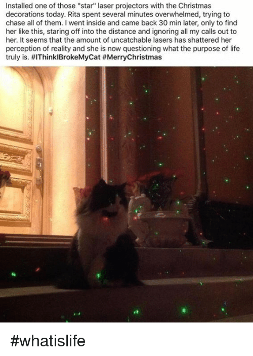 """Memes, Chase, and Decoration: Installed one of those """"star"""" laser projectors with the Christmas  decorations today. Rita spent several minutes overwhelmed, trying to  chase all of them. went inside and came back 30 min later, only to find  her like this, staring off into the distance and ignoring all my calls out to  her. It seems that the amount of uncatchable lasers has shattered her  perception of reality and she is now questioning what the purpose of life  truly is. HIThinklBrokeMycat #whatislife"""