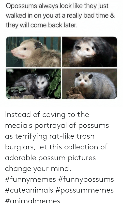 Trash: Instead of caving to the media's portrayal of possums as terrifying rat-like trash burglars, let this collection of adorable possum pictures change your mind. #funnymemes #funnypossums #cuteanimals #possummemes #animalmemes