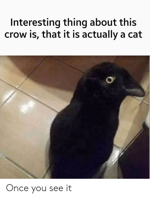 Once You See It: Interesting thing about this  crow is, that it is actually a cat Once you see it
