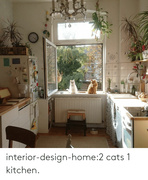 Cats, Tumblr, and Blog: interior-design-home:2 cats 1 kitchen.