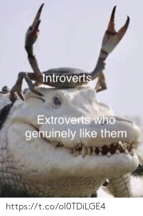 introverts: Introverts  Extroverts who  genuinely like them https://t.co/oI0TDiLGE4