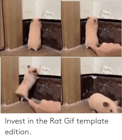 gif: Invest in the Rat Gif template edition.