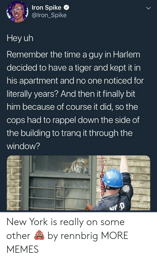 Dank, Memes, and New York: Iron Spike  @lron_Spike  Hey uh  Remember the time a guy in Harlem  decided to have a tiger and kept it in  his apartment and no one noticed for  literally years? And then it finally bit  him because of course it did, so the  cops had to rappel down the side of  the building to tranq t through the  window? New York is really on some other 💩 by rennbrig MORE MEMES