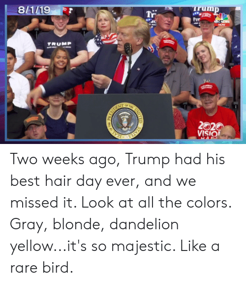 News, Best, and Hair: irump  Tr  Per  8/1/19  NBC NEWS  NOW  TRUMP  OF THE  2020  VISIO  STATES  SEAL  UNITED  ( Two weeks ago, Trump had his best hair day ever, and we missed it. Look at all the colors. Gray, blonde, dandelion yellow...it's so majestic. Like a rare bird.