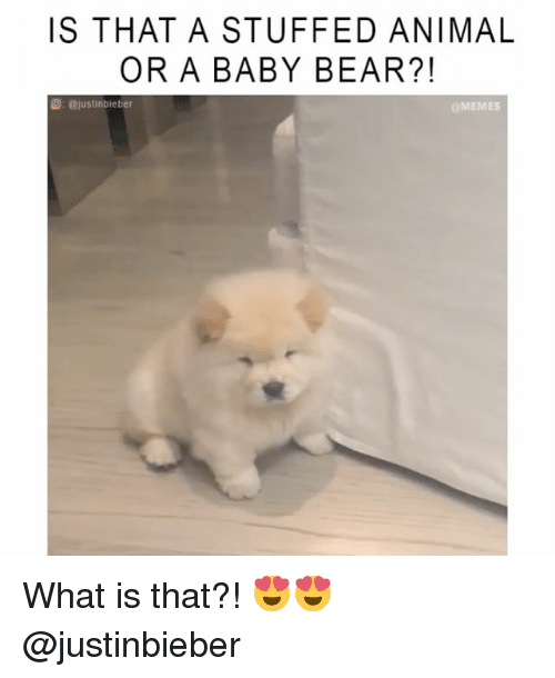 baby bear: IS THAT A STUFFED ANIMAL  OR A BABY BEAR?!  @justinbieber  eMEMES What is that?! 😍😍 @justinbieber
