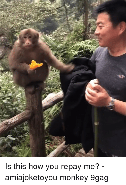 9gag, Memes, and Monkey: Is this how you repay me? - amiajoketoyou monkey 9gag
