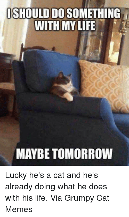 Grumpy Cats: ISHOULDIDOSOMETHING  WITH MY LIFE  MAYBE TOMORROW Lucky he's a cat and he's already doing what he does with his life. Via Grumpy Cat Memes