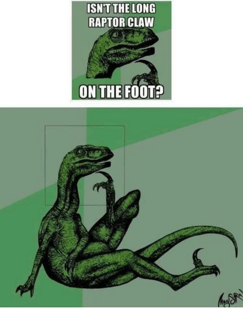 Foot, Raptor, and The: ISN'T THE LONG  RAPTOR CLAW  ON THE FOOT?