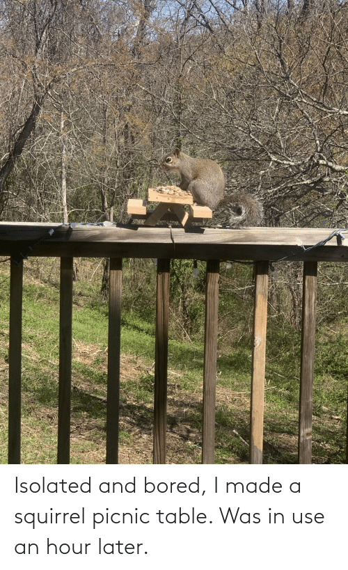use: Isolated and bored, I made a squirrel picnic table. Was in use an hour later.