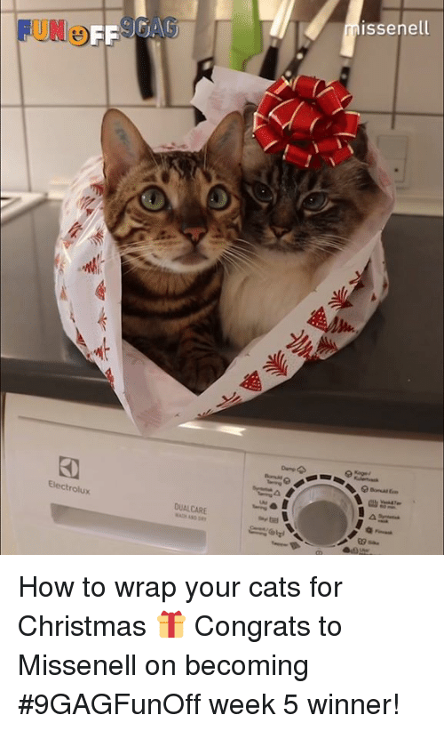 Cats, Christmas, and Dank: issenell  FUNO  FF  Electrolux  DUALCARE  09a. How to wrap your cats for Christmas 🎁 Congrats to Missenell on becoming #9GAGFunOff week 5 winner!