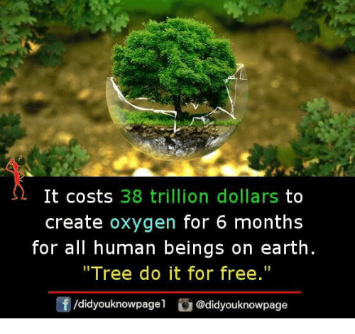 """Memes, Earth, and Free: It costs 38 trillion dollars to  create oxygen for 6 months  for all human beings on earth  """"Tree do it for free.""""  f/didyouknowpagel@didyouknowpage"""