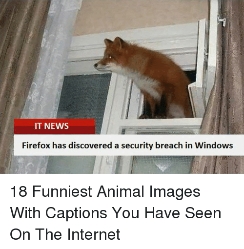 Funniest Animal: IT NEWS  Firefox has discovered a security breach in Windows 18 Funniest Animal Images With Captions You Have Seen On The Internet