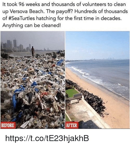Memes, Beach, and Time: It took 96 weeks and thousands of volunteers to clean  up Versova Beach. The payoff? Hundreds of thousands  of #SeaTurtles hatching for the first time in decades  Anything can be cleaned!  BEFORE  AFTER https://t.co/tE23hjakhB