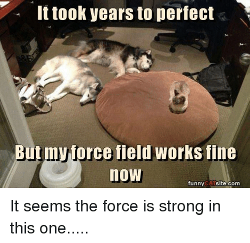 funny cat: It took years to perfect  Butmyprce field works fine  now  funny  CAT  site.com It seems the force is strong in this one.....