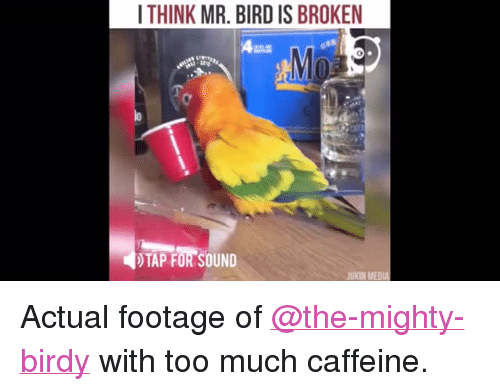 """Too Much, Mighty, and Birdy: ITHINK MR. BIRD IS BROKEN  )TAP FOR SOUND  UKIN MEDIA <p>Actual footage of <a class=""""tumblelog"""" href=""""https://tmblr.co/mqJeMrC1zUWwi8Nf-Fyv_4g"""">@the-mighty-birdy</a> with too much caffeine.</p>"""