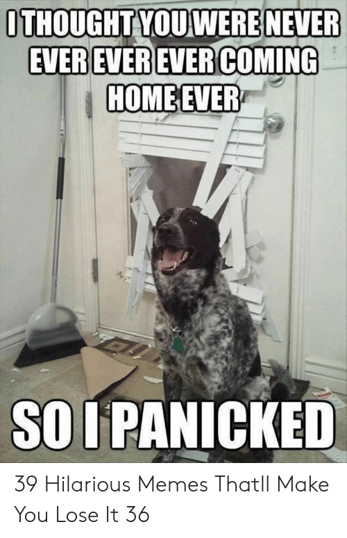 panicked: ITHOUGHT YOU WERE NEVER  HOMEEVER  SO I PANICKED 39 Hilarious Memes Thatll Make You Lose It 36