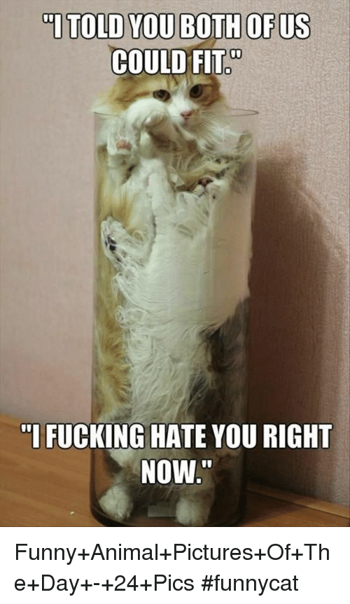 "Fucking, Funny, and Animal: ""ITOLD YOU BOTH OF US  COULD FIT  ""I FUCKING HATE YOU RIGHT  NOW Funny+Animal+Pictures+Of+The+Day+-+24+Pics #funnycat"