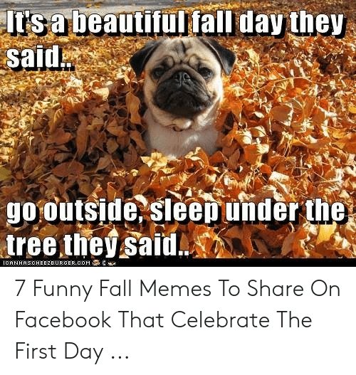 Fall Meme: It's a beau  said  tifultall day they  go outside sleepunder the  iree tie said. 7 Funny Fall Memes To Share On Facebook That Celebrate The First Day ...